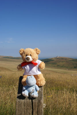 Basil and Lilly on the South Downs Way